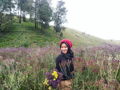 bunga verbena di oro oro ombo gunung semeru