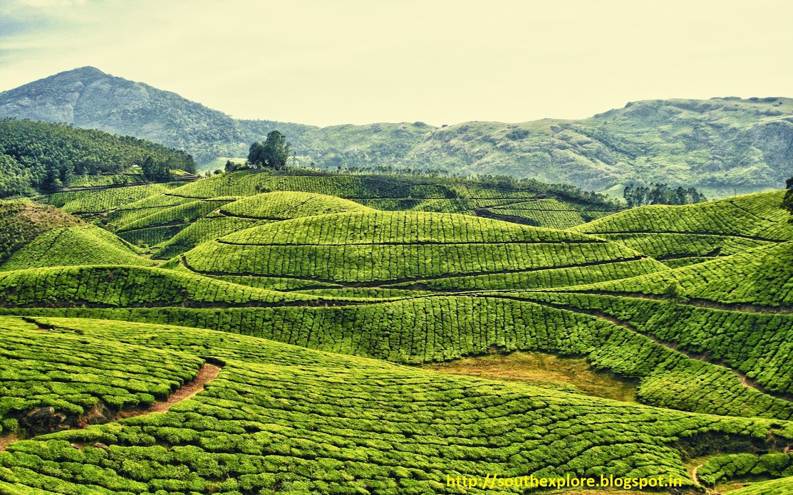 Munnar Honey Moon Destination Tourist Attractions In