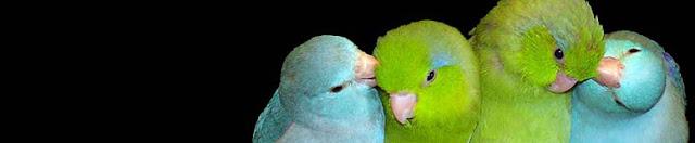 parrots ca