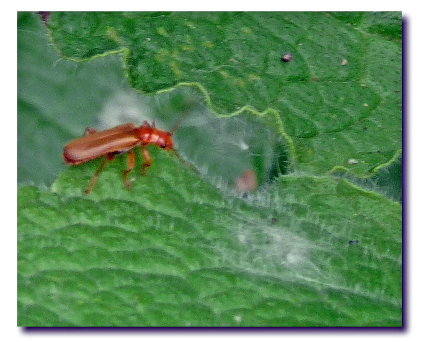 Green June Beetle By Wolfepaw On Deviantart Creatures