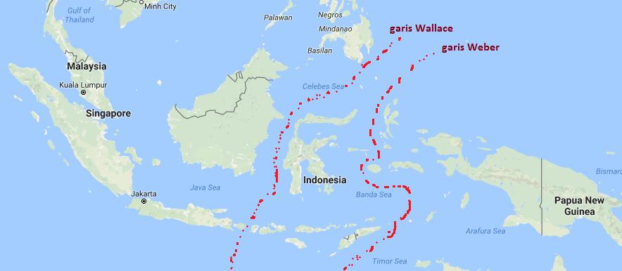 Persebaran Flora Fauna Indonesia Gurugeografi Id