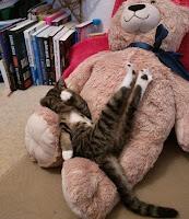 gaya kucing lagi tidur