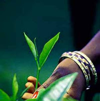 Sri Lanka promotes Ceylon Tea in United States
