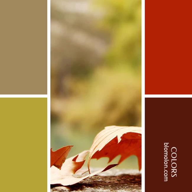 variedad_en_color_combinacion_36