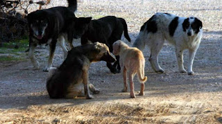 Εγκρίθηκαν 600.000 ευρώ για την ενίσχυση των καταφυγίων αδέσποτων ζώων