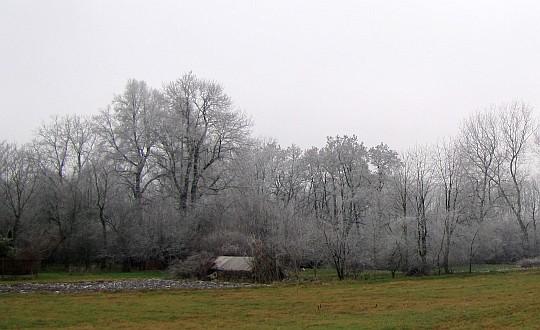 Drzewa nad Dłubnią.