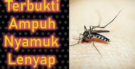Cara Mengusir Dan Membasmi Nyamuk Dengan Mudah ala Wiwapedia