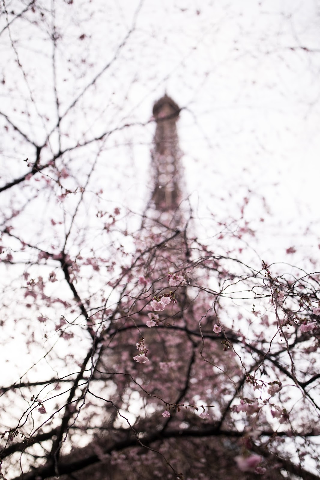 paris tour eiffel spring blossoms