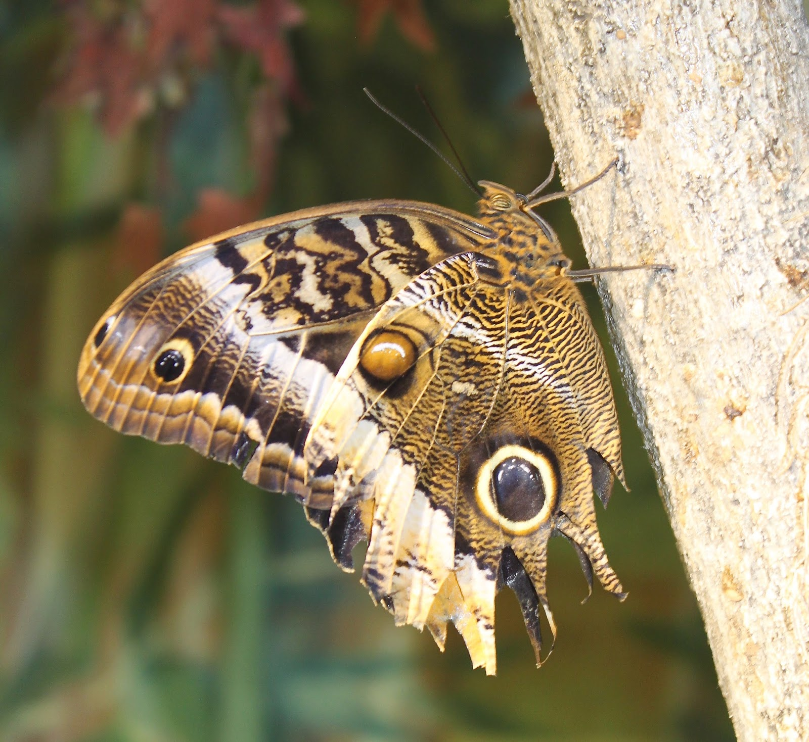 Lowcountry outdoors: 2017 New Orleans - Audubon Insectarium Visit