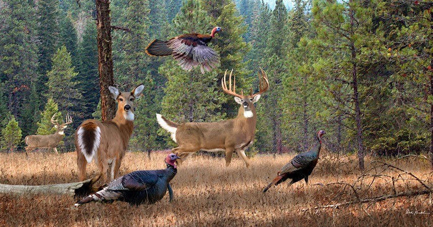 Illinois Department Of Natural Resources Spring Turkey Permits
