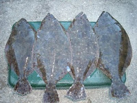 Down to Grand Isle & Stuffed Flounder