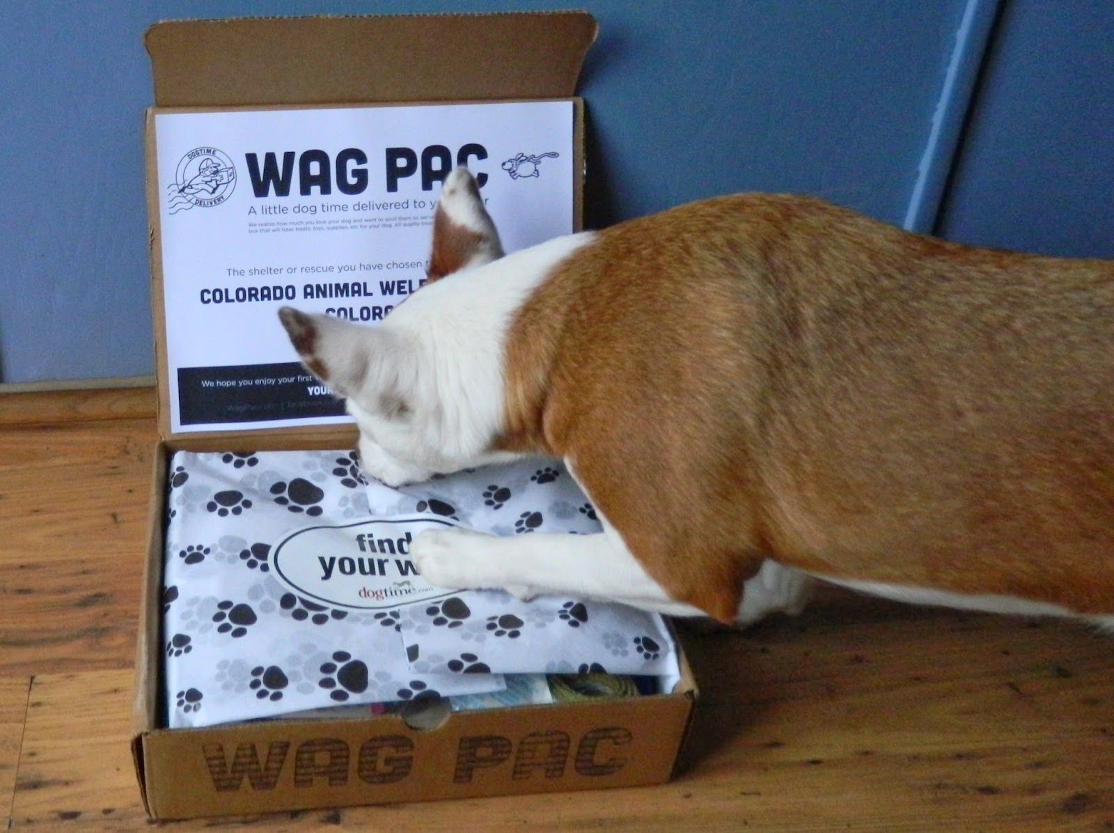 Rubicon Days: Ruby Reviews: Wag Pac March Box