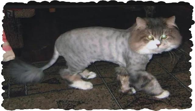 Как и зачем вычесывать кошек !?