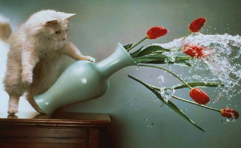 Διψασμένη γατούλα... πετάει τα λουλούδια απ' το βάζο για να πιει νερό (βίντεο)