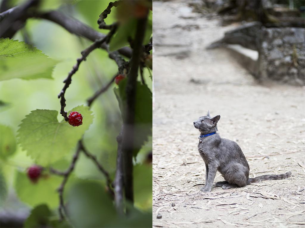 fotografía de fauna y flora Algarve Portugal