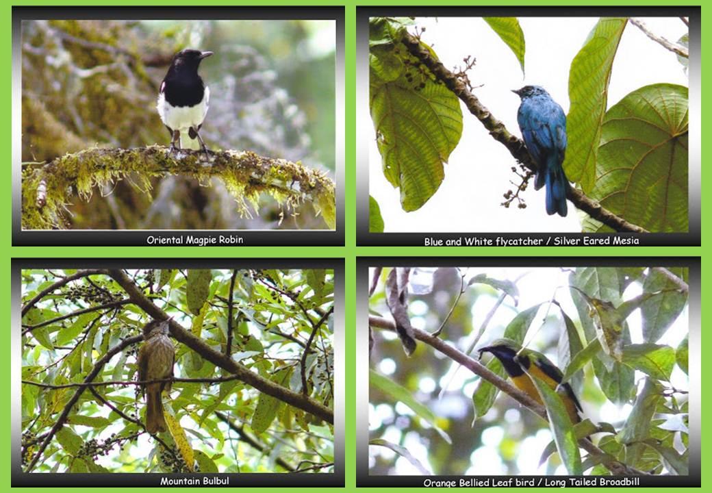 Birding paradise
