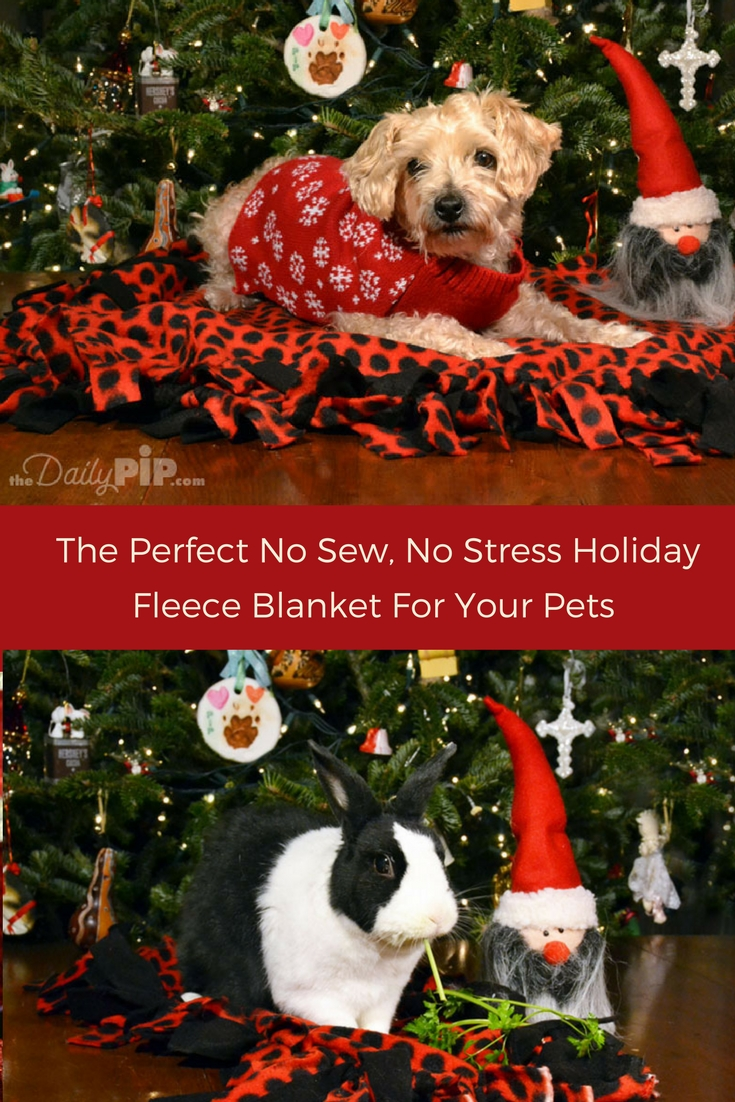 Instructions on how to make a no sew holiday fleece blanket for dogs, cats, bunnies and mice