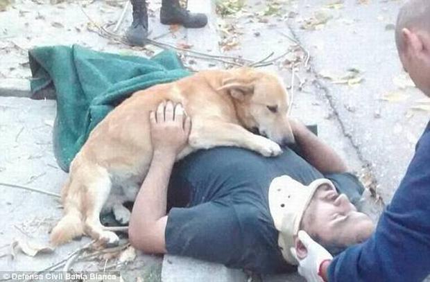 Chủ ngã cây bất tỉnh, chú chó trung thành nhất quyết ở bên không chịu rời