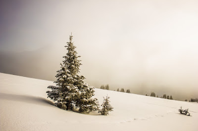 időjárás, Székelyföld, Csíkszereda, hidegpólus, havas erdő, havas fenyő, téli táj