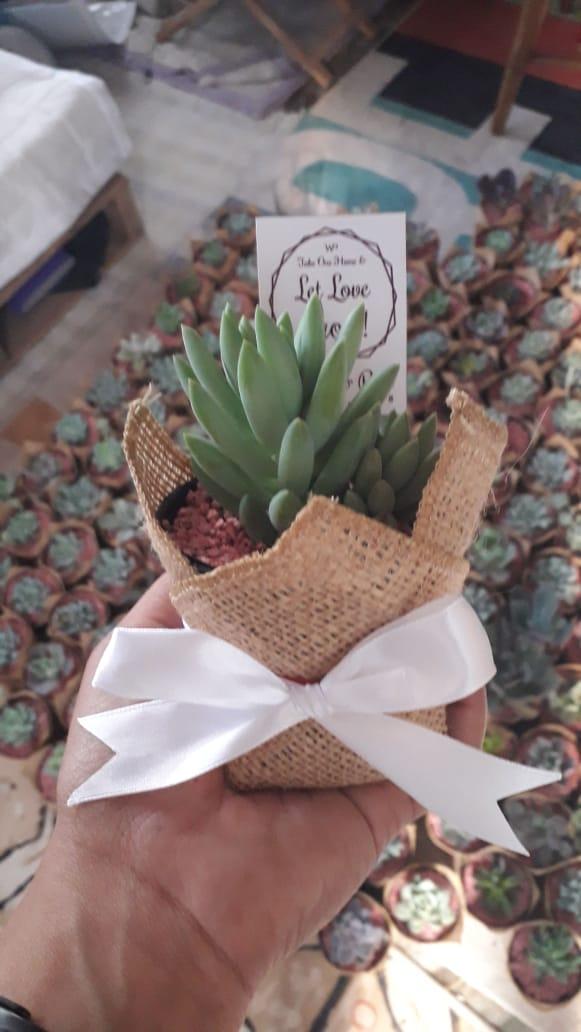 Souvenir Kaktus Mini Dan Sukulen Hias 0812 1450 0420