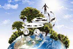 Pengertian Ekologi : Bentuk Piramida Dan Manfaat Ekologi