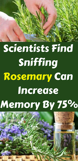 Scientists Find Sniffing Rosemary Can Increase Memory By 75{829e90f2f3088c34e78a883d2be76d4a0647fc18645ee05ad67fba2358a702dd}