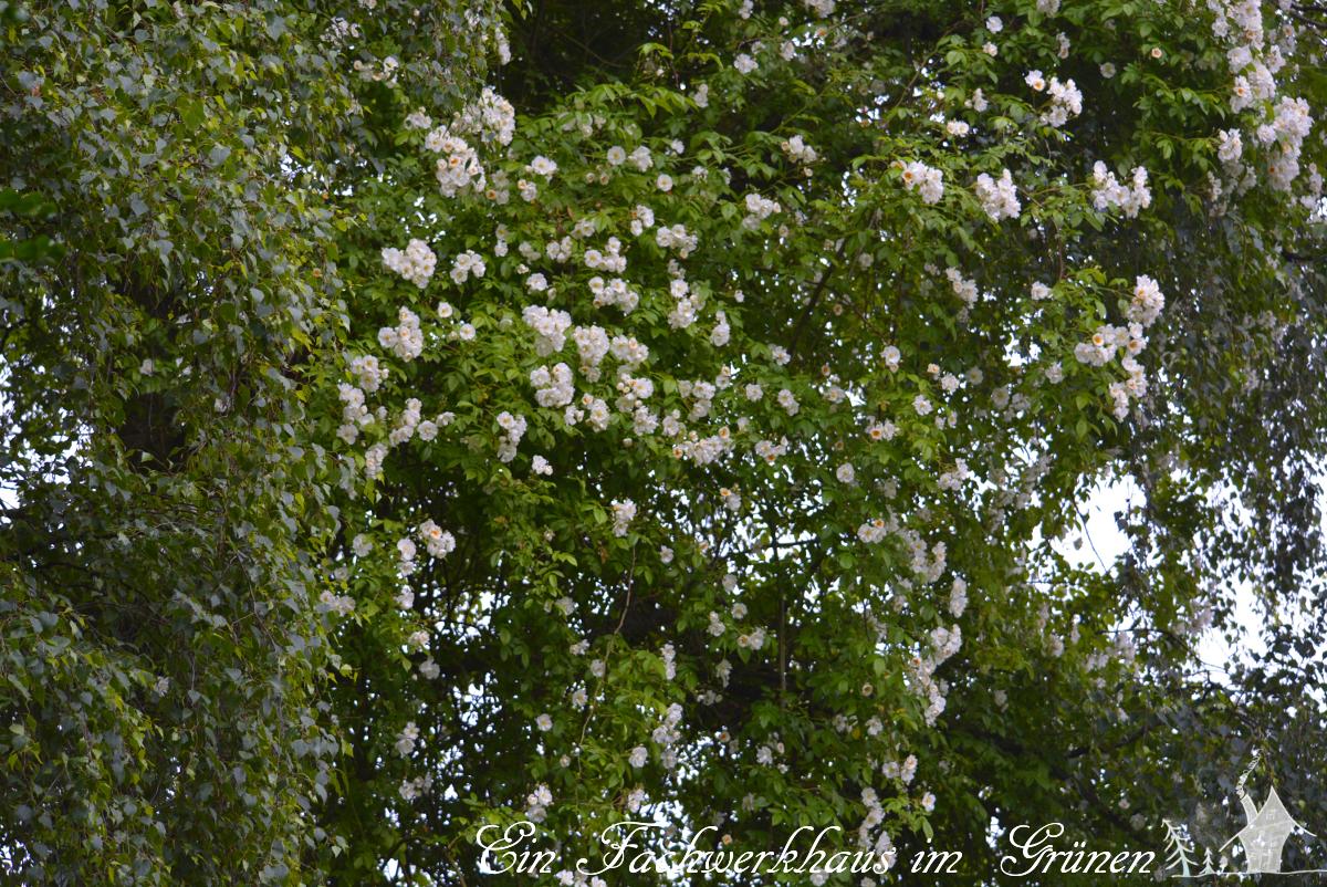 Gartenglück, Bobbie James, Gartenblog