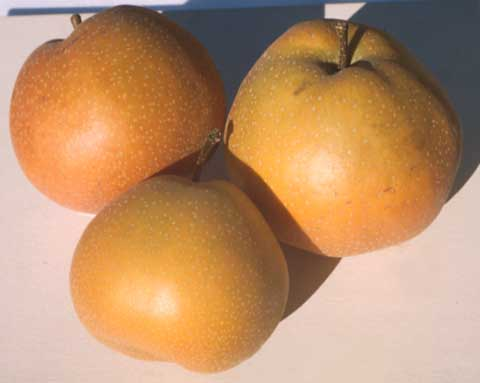 JULIE: Asian pear varieties