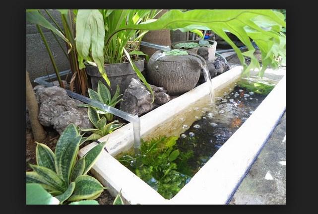 Cara Membuat Kolan Ikan Sederhana Depan Rumah
