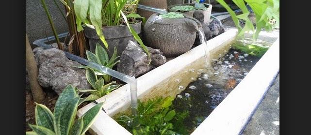 Kolam Ikan Lele Depan Rumah Infoakuakultur Com