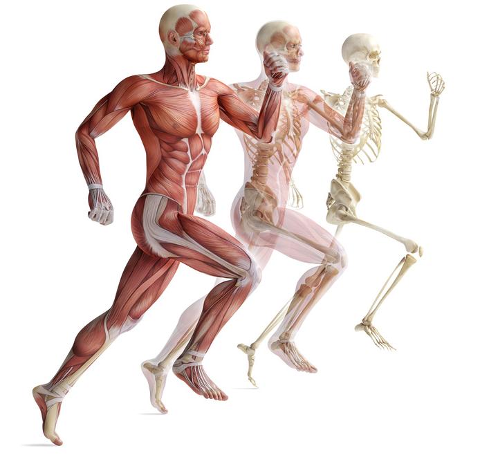 Eirène: terapias integrales: Curso Anatomía y Fisiología