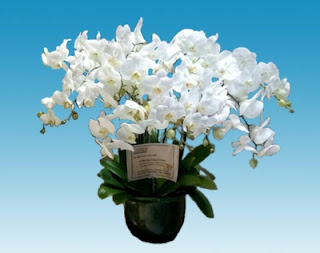 bunga-untuk-ayah-lamongan33