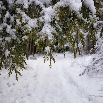snow covered trees www.ruralmag.com
