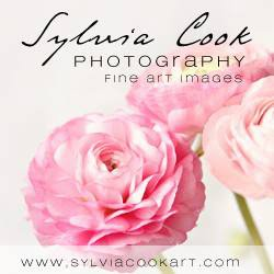 Sylvia Cook Photography