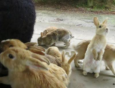 foto de coleccion de conejos claros