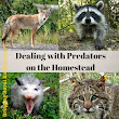 Dealing with Preditors on the Homestead