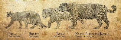 Comparación tamaño Jaguar gigante prehistórico