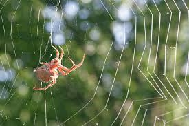 laba-laba dan jaringnya.jpg