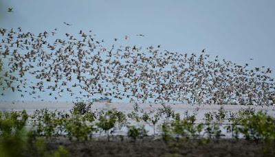 Migrant birds in Alu National Park