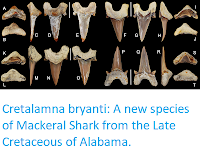 https://sciencythoughts.blogspot.com/2018/01/cretalamna-bryanti-new-species-of.html