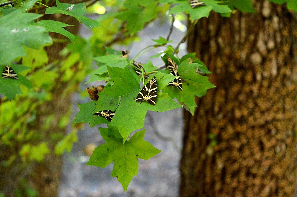 Ολική αναμόρφωση της κοιλάδας των πεταλούδων στη Ρόδο