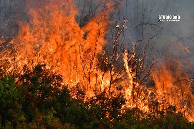 Σε υψηλό κινδυνο πυρκαγιάς η Αργολίδα την Δευτέρα 17 Αυγούστου