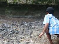 Mengejutkan, Setelah di Hitung, Ternyata Ternak Ikan Lele Menggiurkan Banget Yah,,