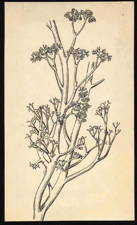 Trimerophytophyta