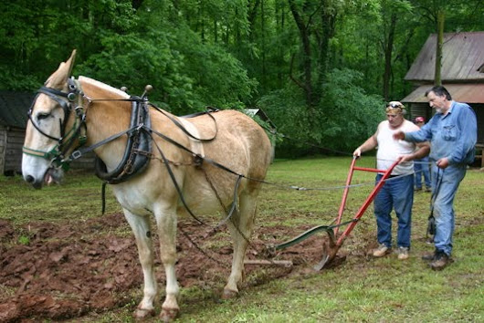 Growing Up In Rural Alabama and Georgia: How To Plant A Garden OR Stubborn As A Mule!