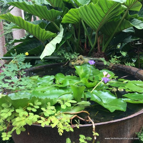 water garden at Hunte's Gardens in Barbados
