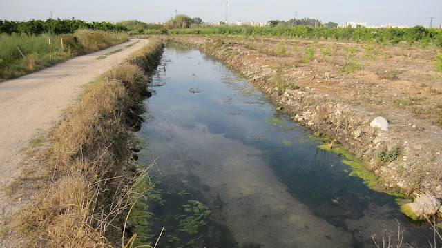 Sèquia del camí de la Tancada marjal de Gandia