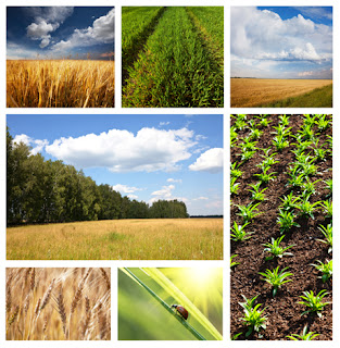 Photo Collage of Agriculture