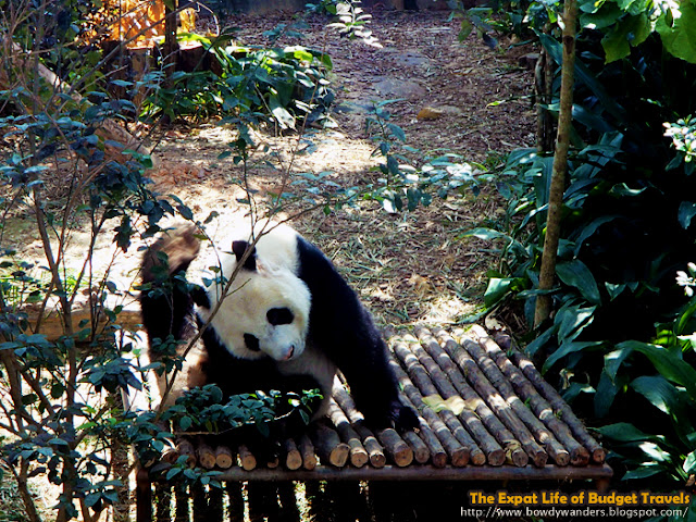 bowdywanders.com Singapore Travel Blog Philippines Photo :: Singapore :: River Safari Singapore Wildlife Park - Asia's First and Only River-Themed Wildlife Park