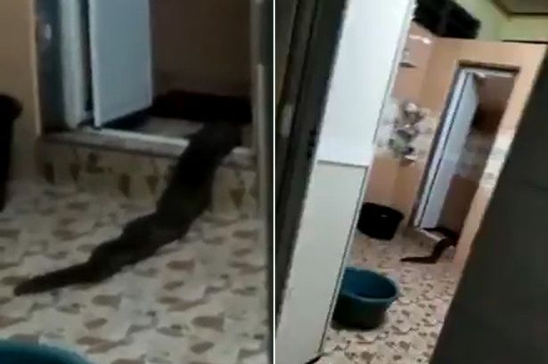 Monster crawls out of toilet video freaklin for 1 2 3 4 monsters walking across the floor
